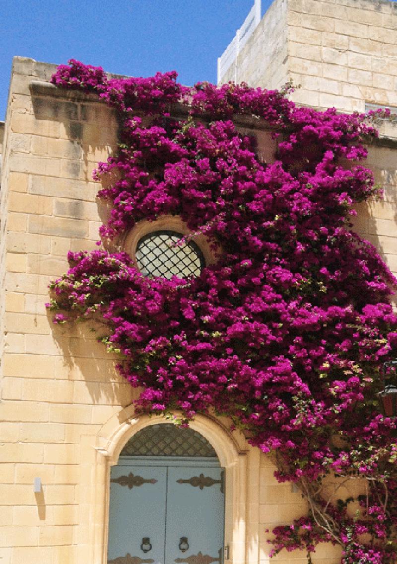 malta-porta-mdina